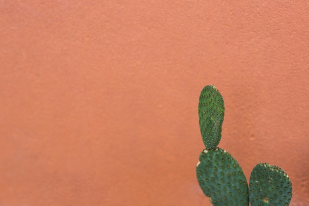 Prickly pear nopales cactus against brown background Free Photo
