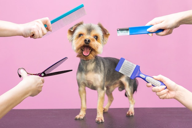 Профессиональные заботы о собаке в специализированном салоне. грумеры держат инструменты на руках. розовый фон концепция грумера Premium Фотографии
