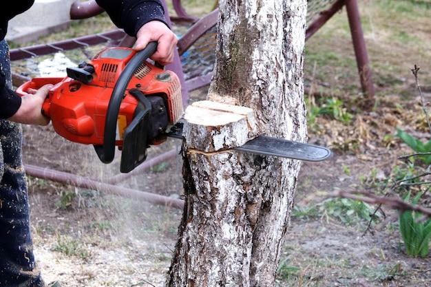 Pruning shears in the garden in spring Premium Photo