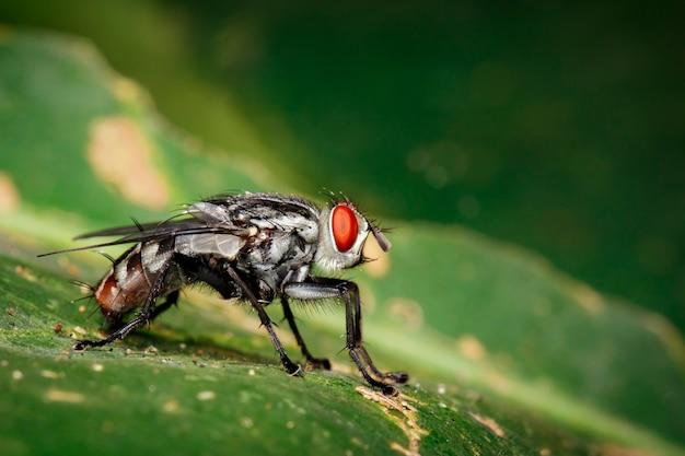 緑の葉のハエ(双pt目)のイメージ。昆虫。動物 Premium写真