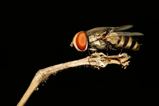 黒のハエ(双pt目)のイメージ。昆虫動物 Premium写真