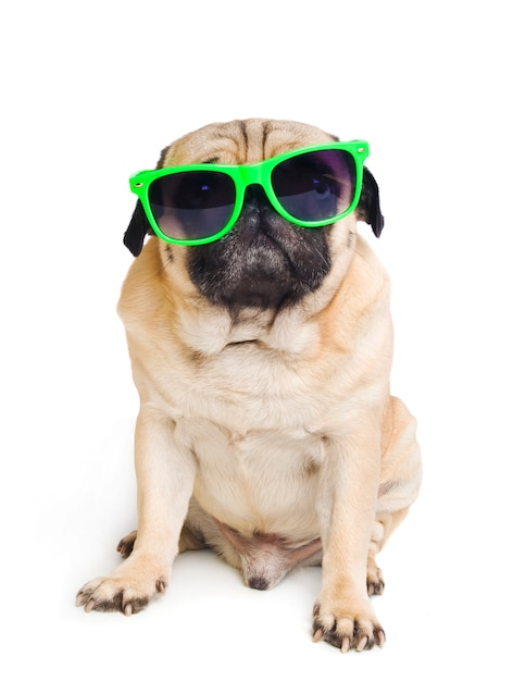 Pug with sunglasses on white Premium Photo