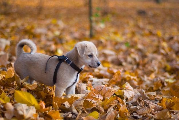 Puppy in the autumn park Premium Photo