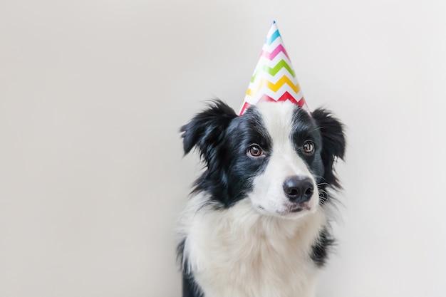Бордер колли щенок в шляпе на день рождения, изолированные на белом фоне Premium Фотографии
