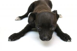 Puppy dog, light Free Photo