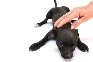 犬、子犬の子犬 無料写真