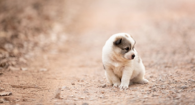 Puppy dog sitting alone on the soil road Premium Photo