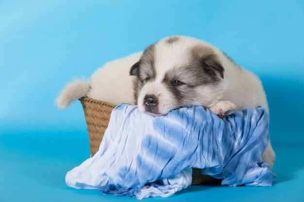 Puppy dog sleep on wooden basket Premium Photo