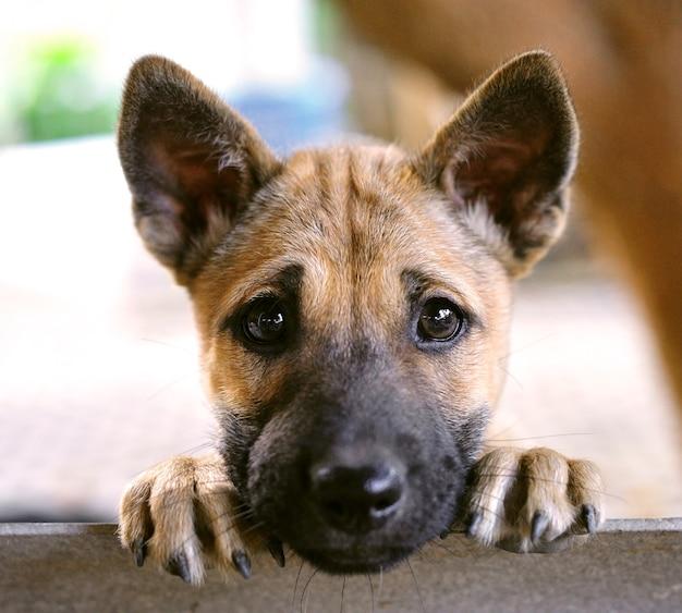 Puppy dog Premium Photo