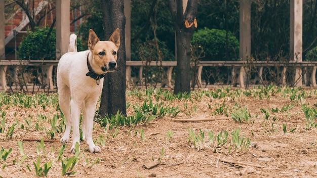 Purebred dog in collar on walk Free Photo
