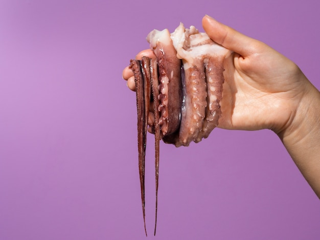 Purple background with hand holding octopus Free Photo