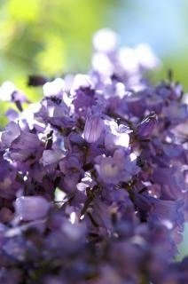 Purple Flowers Bloom Nature Photo Free Download