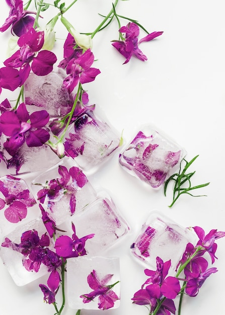 Purple flowers in cubes of ice Free Photo