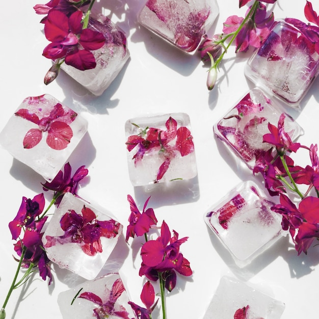 Purple flowers in ice cubes on white background Free Photo