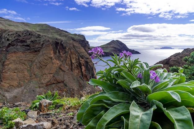 Fiori viola con una bellissima vista dell'isola di madeira in portogallo Foto Gratuite