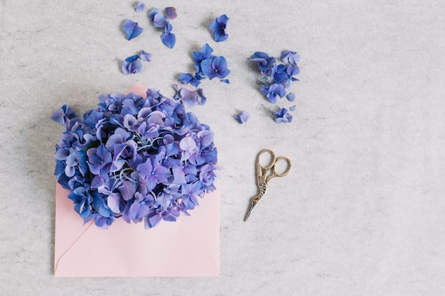 Purple hydrangea flower on pink envelope with scissor against rough backdrop Free Photo