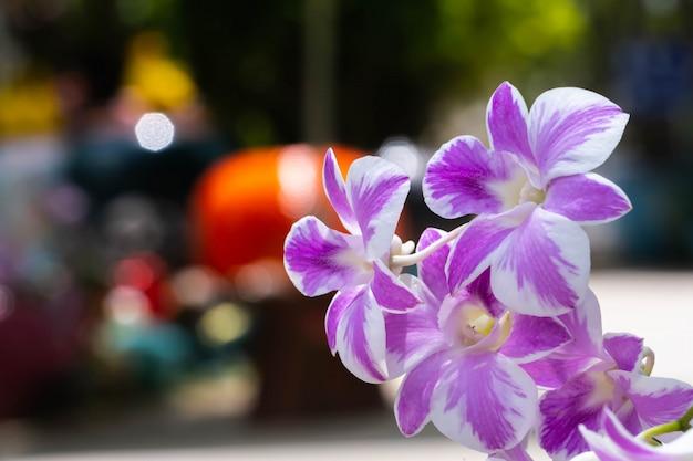 路上の紫色の蘭 Premium写真