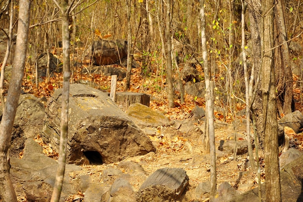 Puyango окаменевший лес Premium Фотографии