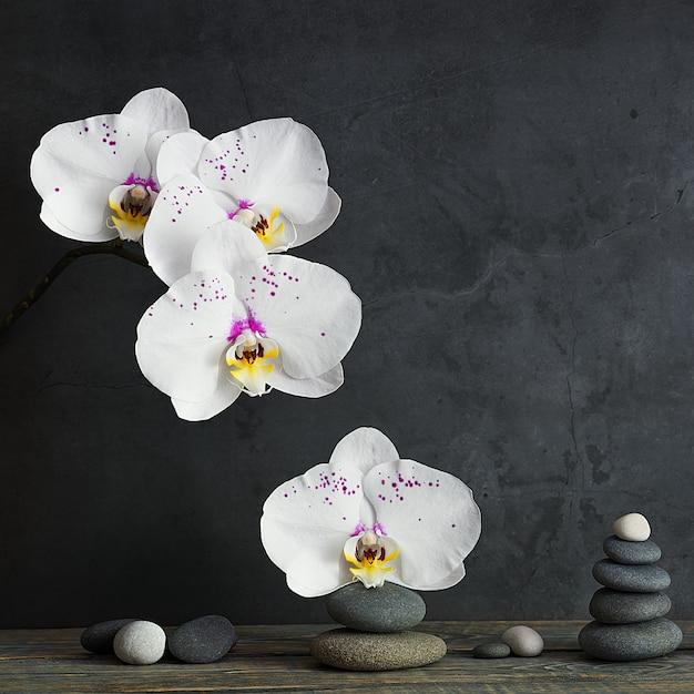 Пирамида из камней и цветов орхидеи на светло-серой стене Premium Фотографии