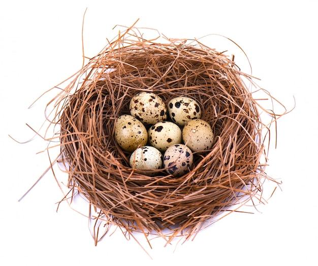 Quail eggs in a straw nest Premium Photo