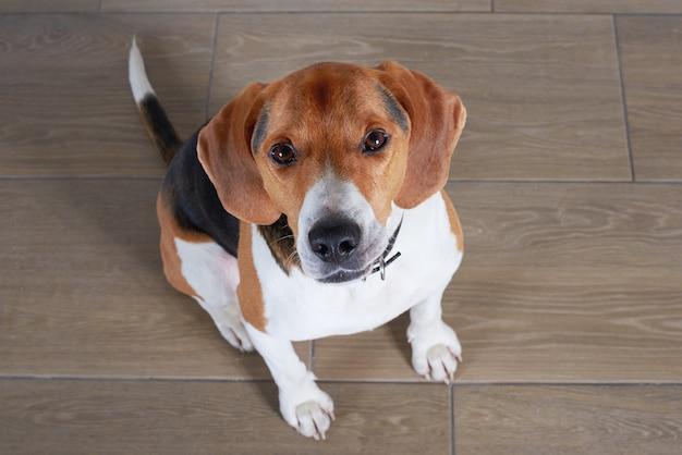 조용하고 친절한 개가 바닥에 앉아 무료 사진