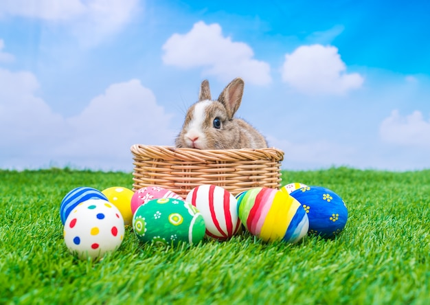 Rabbit and easter eggs in green grass with blue sky | Free Photo