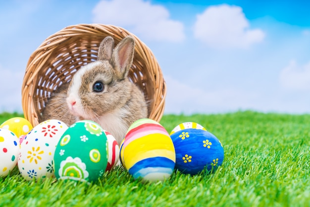 Rabbit and easter eggs in green grass with blue sky Free Photo