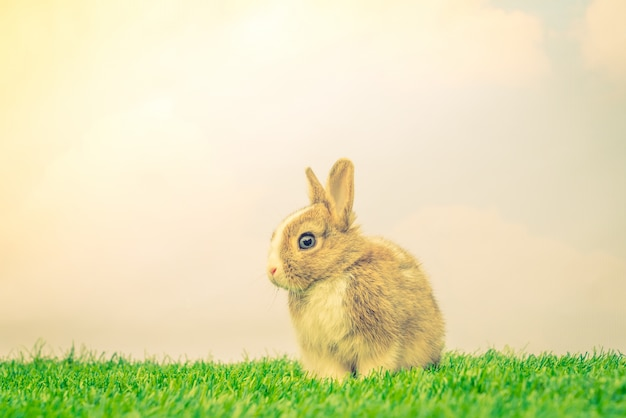 Rabbit on green grass for easter holiday ( Filtered image proces Free Photo