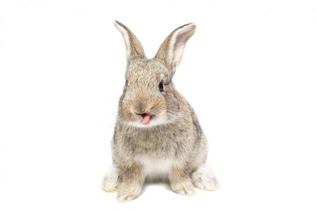 Rabbit on a white background Premium Photo