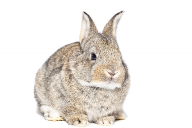 Rabbit on white background Premium Photo