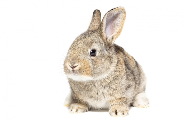 Rabbit on white background Premium Photo