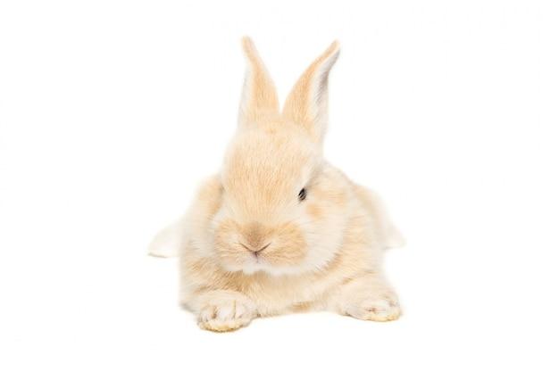 Rabbit on white Premium Photo