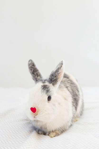 Rabbit with decorative red heart on nose Free Photo