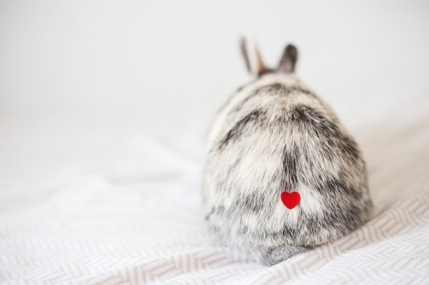 Rabbit with ornament heart on fur Free Photo