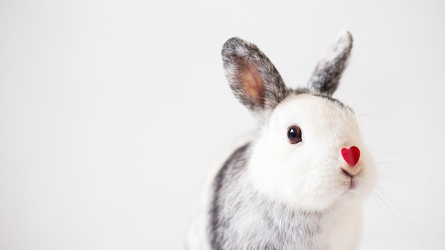 Rabbit with ornament heart on nose Free Photo