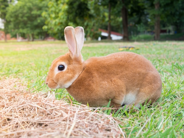 Rabbits are eating grass in the backyard Photo | Premium ...