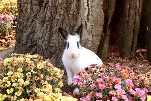 Rabbits in the flower garden Premium Photo