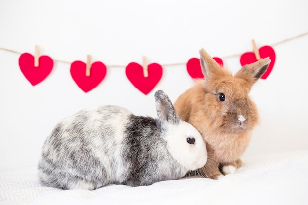 Rabbits near collection of ornament hearts on twist Free Photo