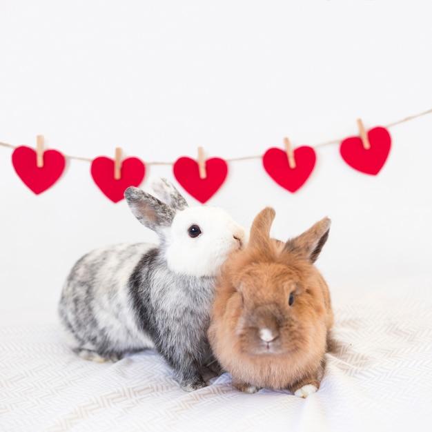 Rabbits near row of ornament hearts on twist Free Photo