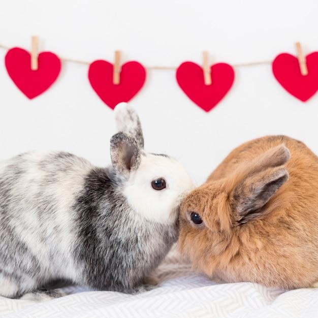 Rabbits near set of ornament hearts on twist Free Photo