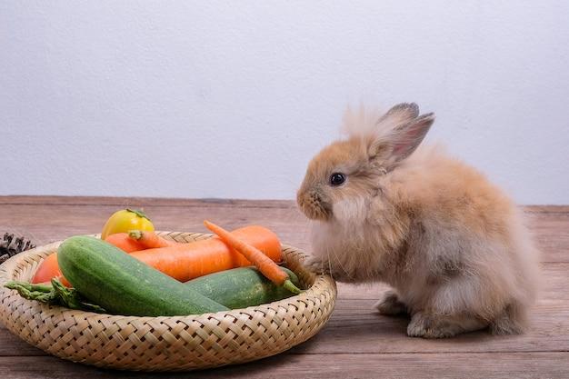 나무 바닥에 토끼, 당근, 오이, 토마토 및 나무 바닥에 배럴 프리미엄 사진