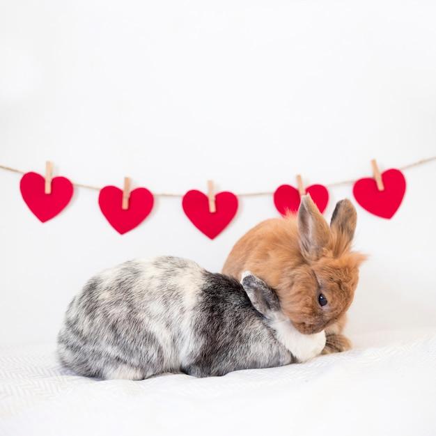 Rabbits playing near set of ornament hearts on twist Free Photo