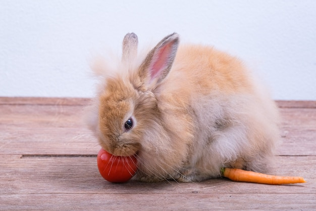 Rabbits On Wooden Floors Carrots Cucumbers Tomatoes And Barrels