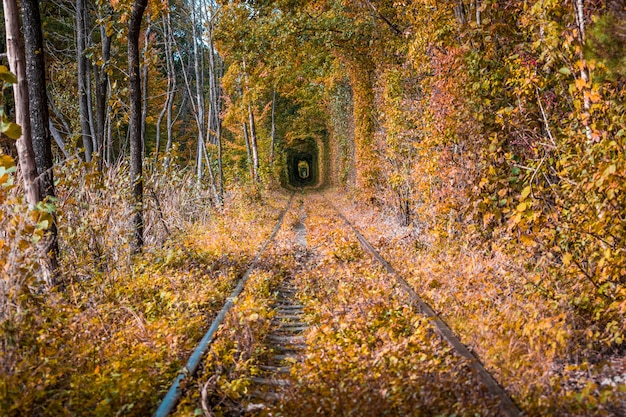 A railway in the autumn forest tunnel of love Premium Photo