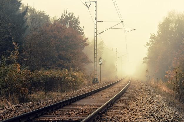 숲에 철도 무료 사진