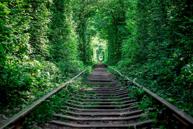 A railway in the spring forest tunnel of love Premium Photo