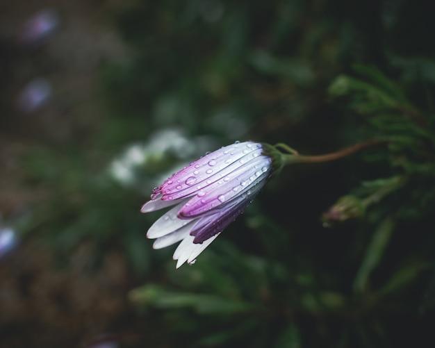 Капли дождя на лепестках цветов Бесплатные Фотографии