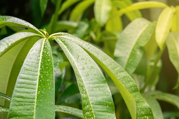 Rain drops track the green leaves Premium Photo