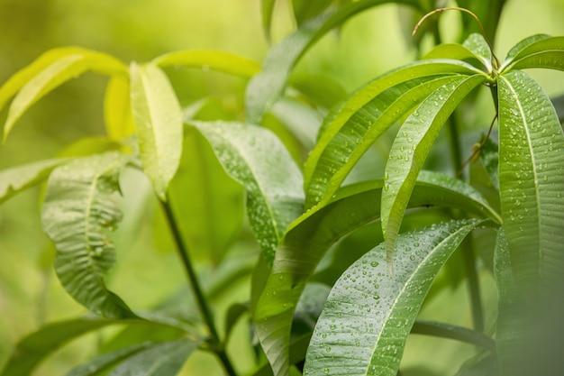 Rain drops track the green leaves. Premium Photo