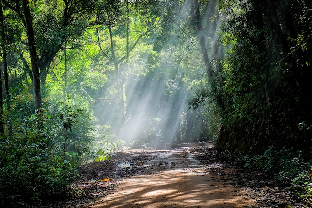 Rain forest with a dirt road Premium Photo